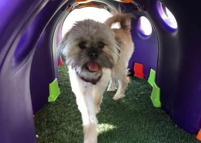In my tunnel